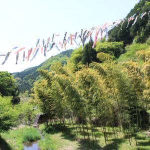 振り返って その21 和田の里の「鯉のぼりの泳ぐ風景」
