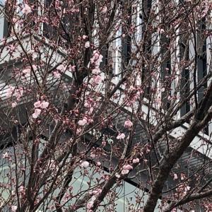 3/16開催報告&次回のご案内