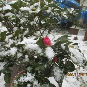 雪が降り最後の冬支度にとりかかる