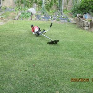 今年初めての芝刈りは草刈り機で行う