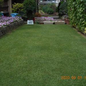 芝刈りをし追肥する