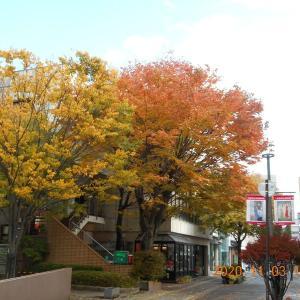 街中は今が紅葉の盛りかな