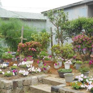 鉢植えは配置換え足すことも引くこともでき便利だ
