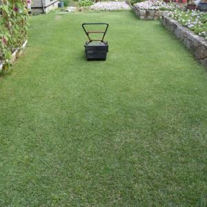 芝刈りをし野芝を選んだのはよい選択だったと思っている