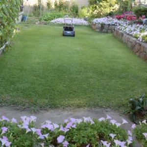 仕事の意欲がわき芝生を刈る
