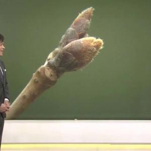 【画像】NHKで放送事故