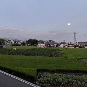 イチジク畑と14番目の月