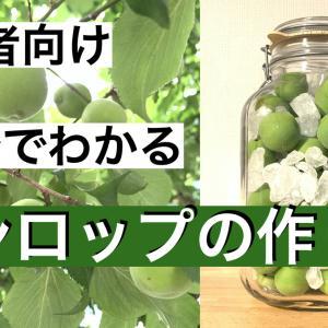 【初心者向け】梅シロップの作り方