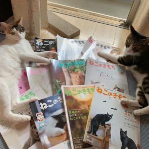 定期購読していた通販専用猫雑誌「ねこのきもち」を解約!1年分の情報で充分かな。