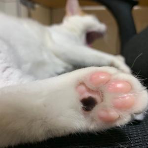 猫の爪の付け根が黒く汚れている。垢かな?拭き取りに付いて獣医に確認してみた。