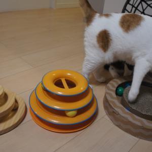 ボールグルグルサークル系おもちゃ3種比較!実際に猫に遊んでもらった感想です!