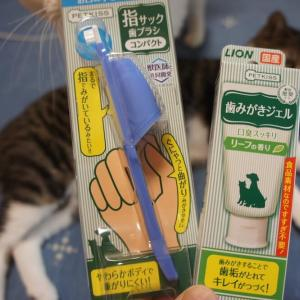 PTEKISSで猫の歯磨き!指サック歯ブラシと歯みがきジェルのセットを購入しました!