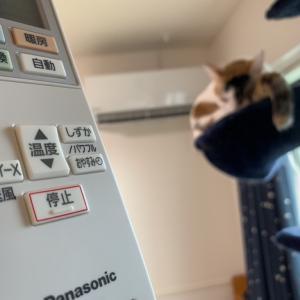 猫の留守番部屋にエアコン設置!つゆとっては業者に震える恐怖の一日でした。