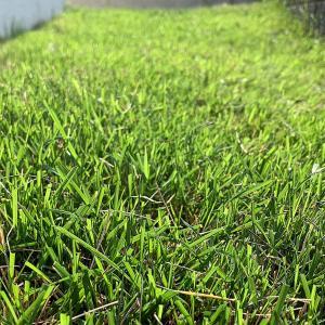 注文住宅で庭を芝生にしたら手入れが大変です