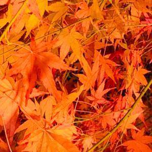 秋は魂の季節