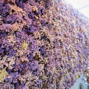 週末ソウル:映え(バエ)する花屋