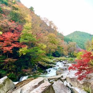 木々が一斉に赤く染まるワケ(*^^*)