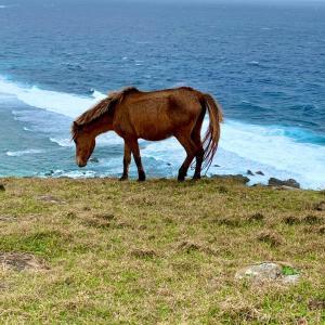 与那国馬・馬のいる風景に癒される (与那国島 9)