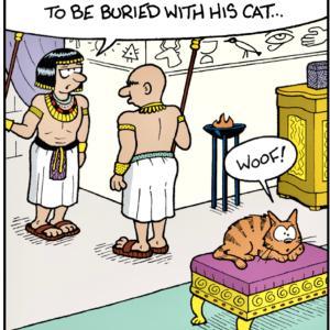 猫の護身術