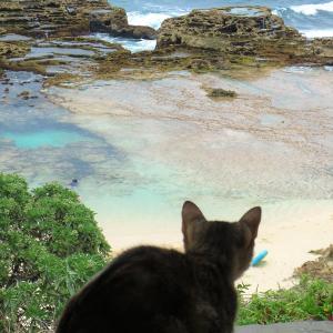 7つの海:そこで見た風景