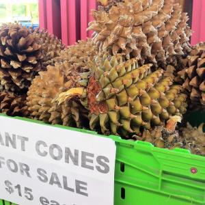 果実の町クロムウェルのマーケットで見つけたもの(ニュージーランド)