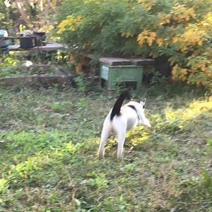 秋の庭をブチが駆ける