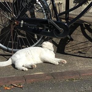 自転車にスリスリ