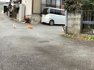 待つ猫と待たせる猫 2021