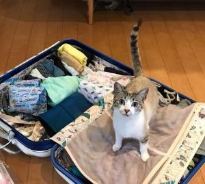 【おもしろ】浮気を疑う妻のような目で見てくる猫の画像が話題!