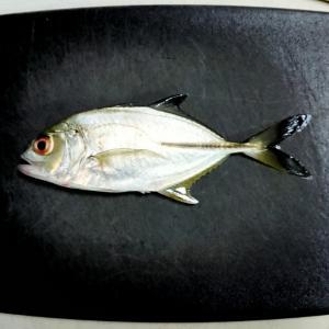 悲惨な釣り