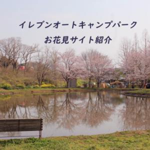 【お花見キャンプ】千葉 イレブンオートキャンプパーク~桜の多いサイトを詳しく紹介~