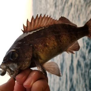 【釣り×科学】魚は痛みを感じない?「磁気」を感じて釣り針を認識しているってホント?|TSURI HACK[釣りハック]