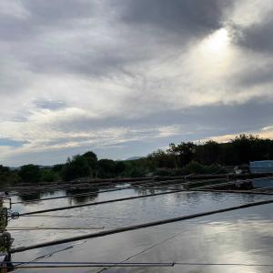 淀の釣り天狗池 10月20日(日)曇り時々晴