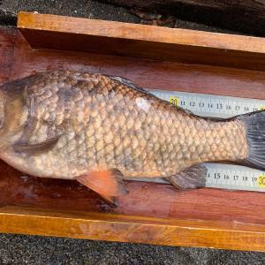 ヘラブナ釣り 何が釣果に影響するのか
