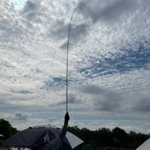 ヘラブナ釣り 朱紋峰 嵐月と朱紋峰 本式の釣り比べ