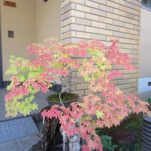秋忍び寄る散歩