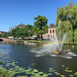 夏の日差しが気持ちいい最近のオランダ♪