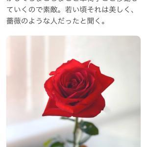 薔薇のような人