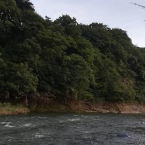早田川と赤川本流~2020年山形遠征記2(3日目)