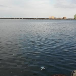 もっとサバを釣りたい~近場の海釣行2020年10月その1