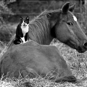 競走馬の、ゆくえ。