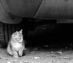 2本足になった、ネコ*