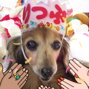 リップちゃん☆13歳のお誕生日・。*゚♪