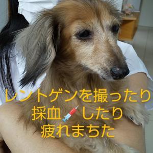 ③9月19日リップちゃん病院へ行って来ました。