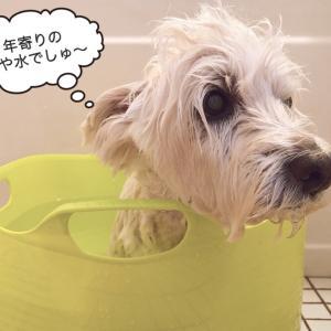 お風呂day
