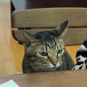 小さな受講生も一緒に断捨離のお勉強 ネコ好きさんいらっしゃい
