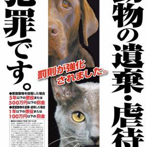 猟奇事件!野良猫の虐待が止まらない福島‼︎