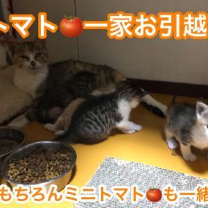 母猫トマトと仔猫ミニトマトたち、今日も元気!