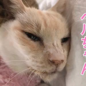 極寒の福島県、老病傷犬猫たちを襲う底冷え!
