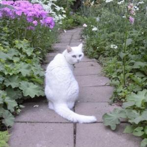 『野良猫は可哀想』は間違いです